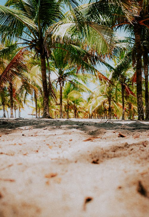 Coconut Palm Trees on Brown Sand