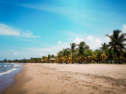 Beach Shore with Coconut Trees
