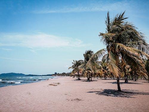 Coconut Trees on Beach Shore