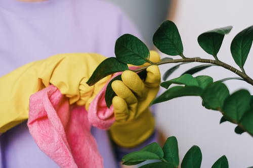 Crop unrecognizable female in yellow gloves cleaning leaves of green plant in daytime