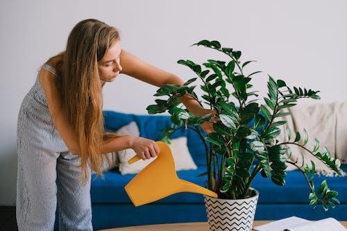 Základová fotografie zdarma na téma apartmán, blond, bujný