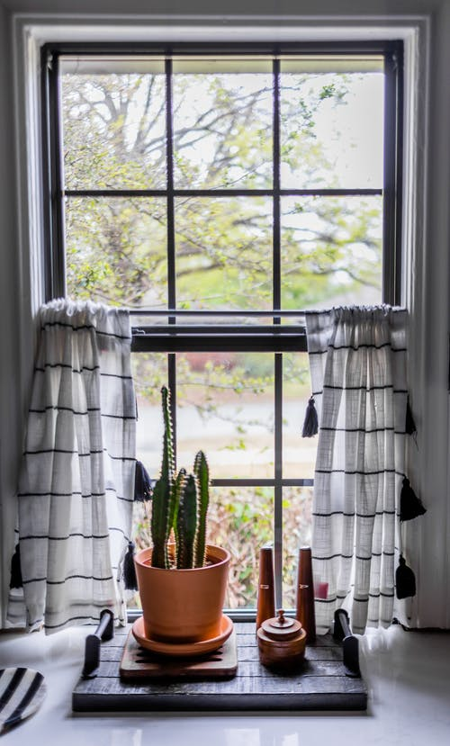 Potted cactus on tray near window at home