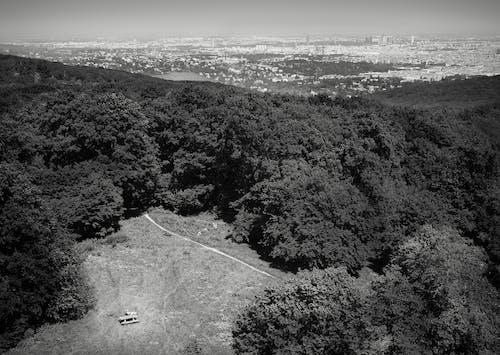 경치, 경치가 좋은, 공중 촬영, 나무의 무료 스톡 사진