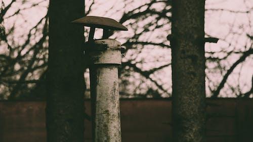 Бесплатное стоковое фото с дерево, деревья, кладбище, металл