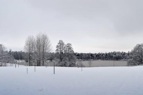 Free stock photo of daylight, forest, landscape, nature