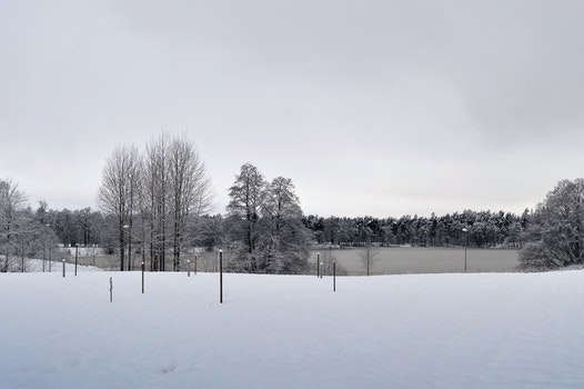 Free stock photo of snow, landscape, nature, forest