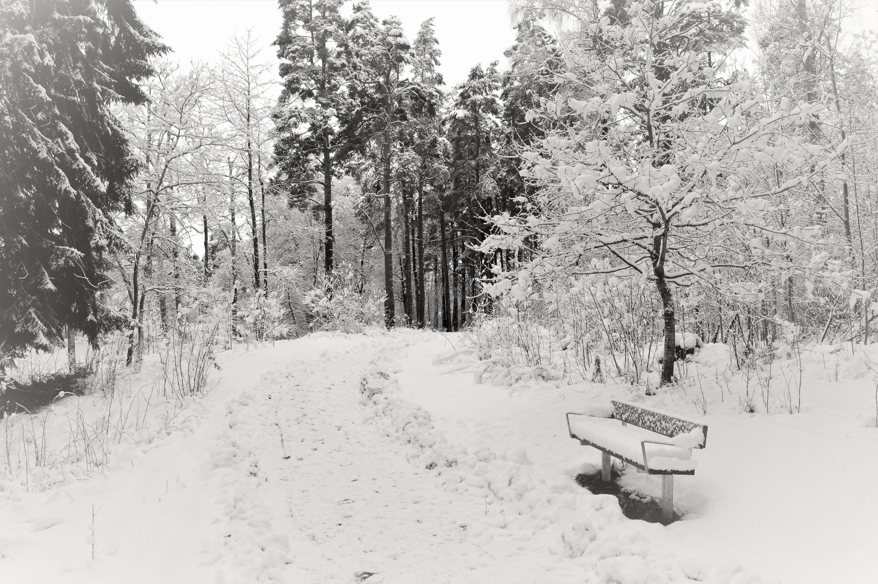 Free stock photo of snow, bench, road, nature