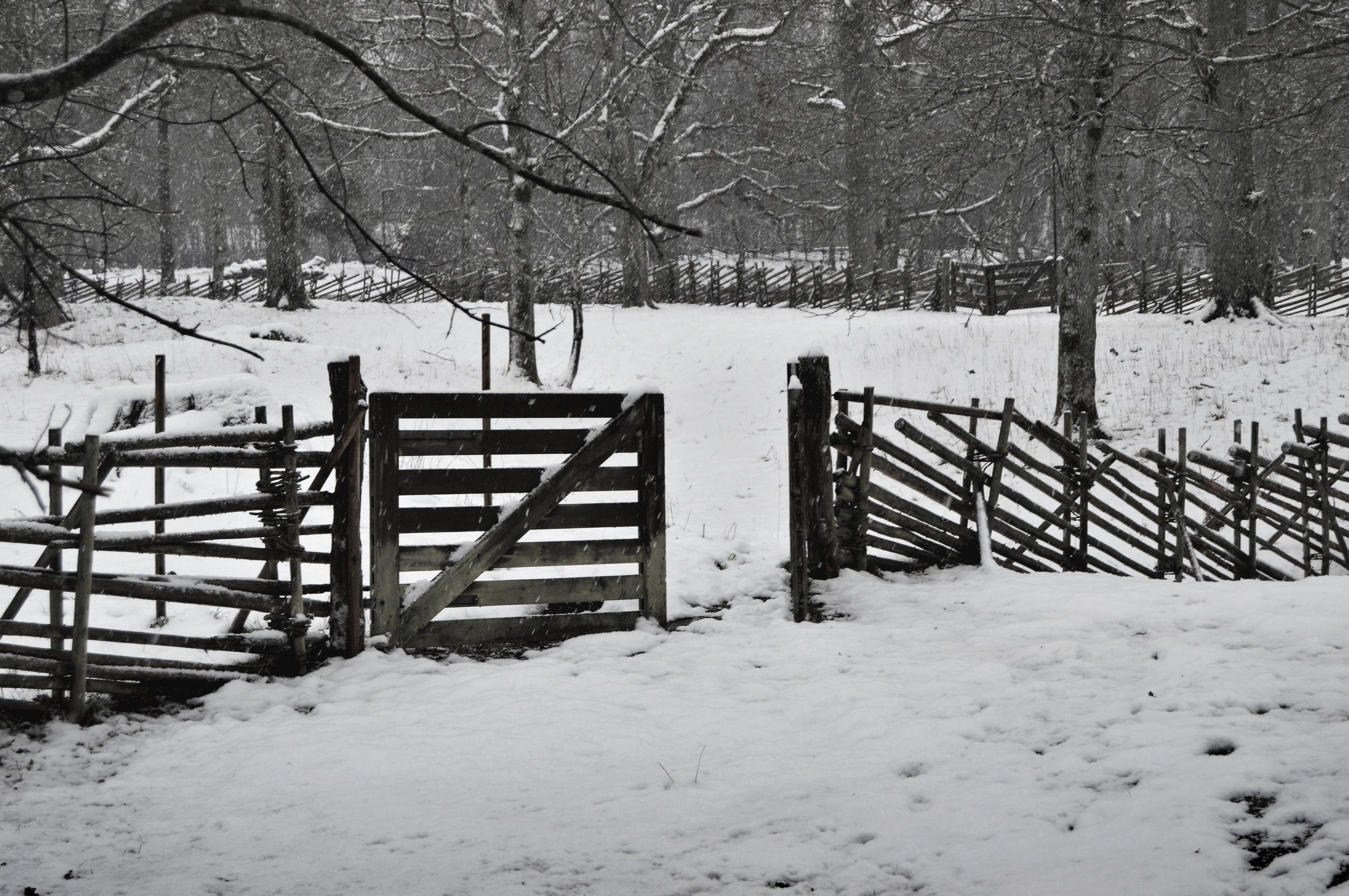 of fence, nature, snow, sweden
