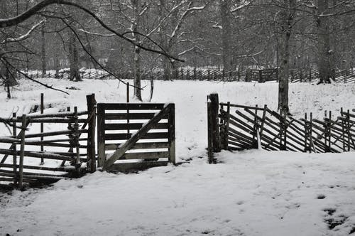Free stock photo of fence, nature, snow, sweden