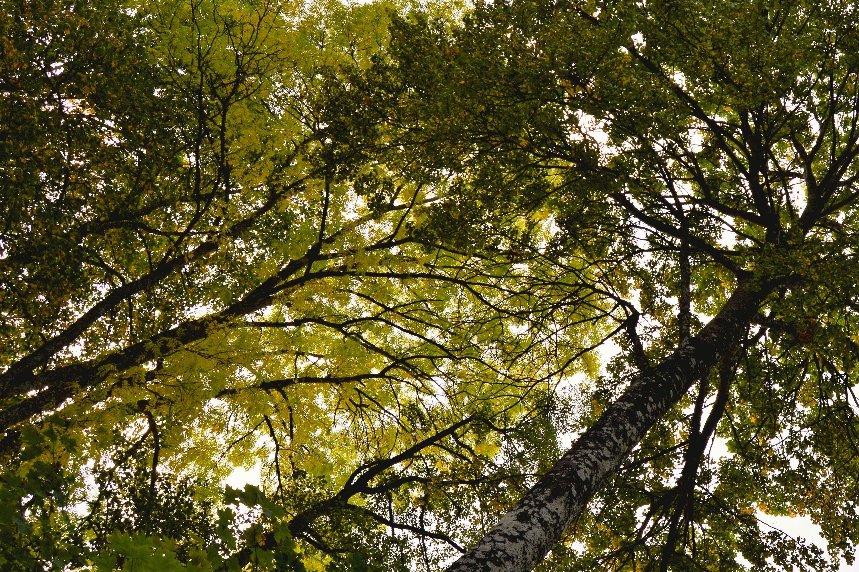Free stock photo of autumn, fall, leaf, leaves
