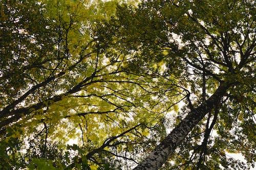 Free stock photo of nature, sunlight, sweden, tree