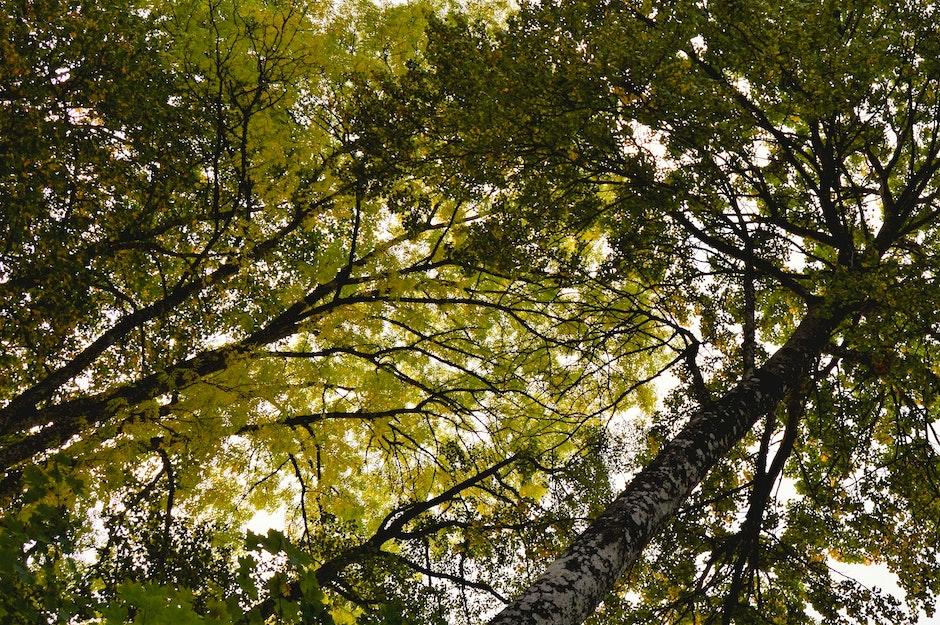 autumn, fall, leaf