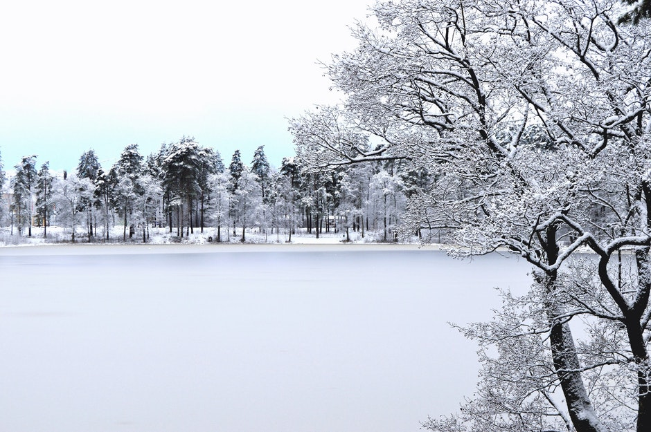 Photo of Forest With Snow