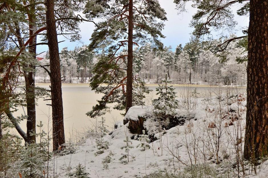 day, forest, frozen