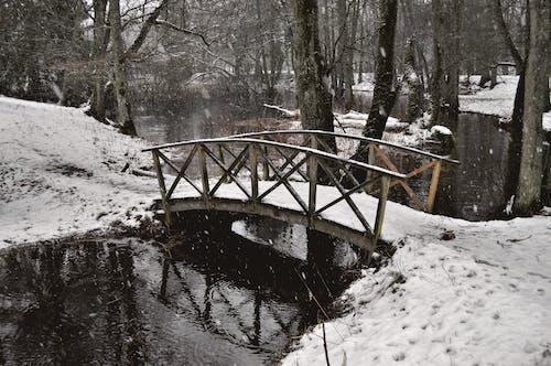 Free stock photo of Apladalen, bridge, forest, nature