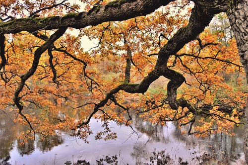Free stock photo of Apladalen, landscape, nature, sweden