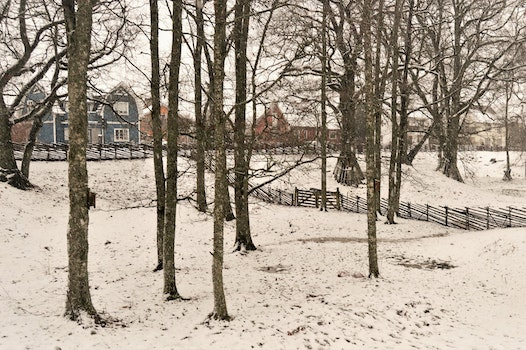 Free stock photo of snow, nature, houses, trees
