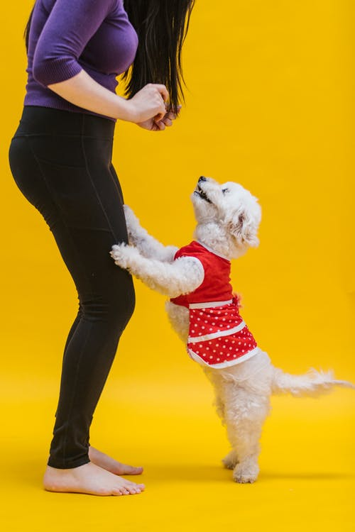 Woman Wearing Leggings Playing with a Dog