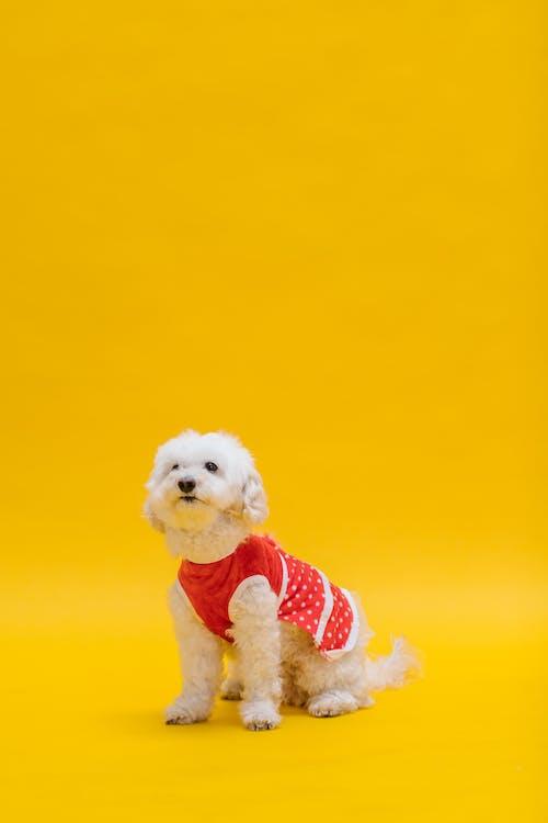 Foto stok gratis anjing, binatang, binatang peliharaan