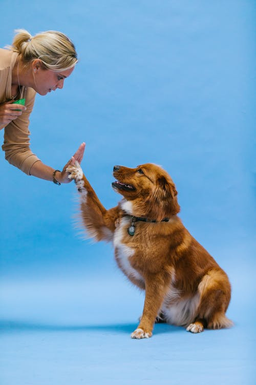 Dog Doing a High Five