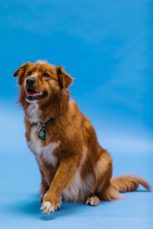 Dog Sitting on Blue Surface