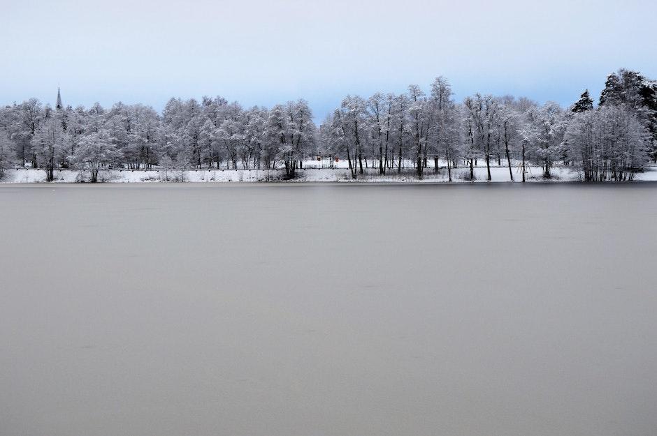 daylight, forest, frozen