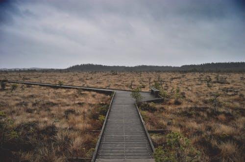 Foto d'estoc gratuïta de arbre, arbres, bosc, botiga mosse