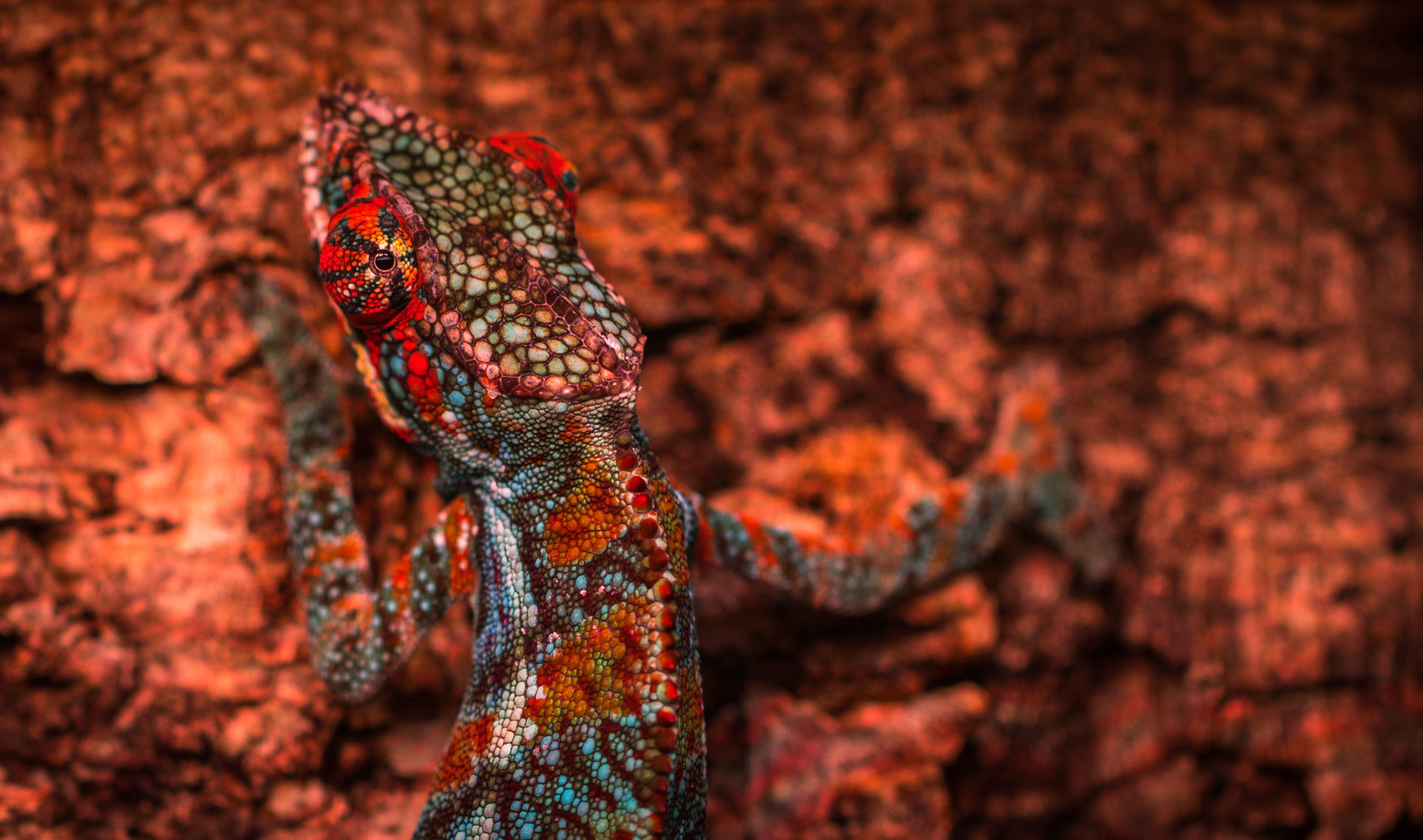 Close-up Photo Multicolored Lizard