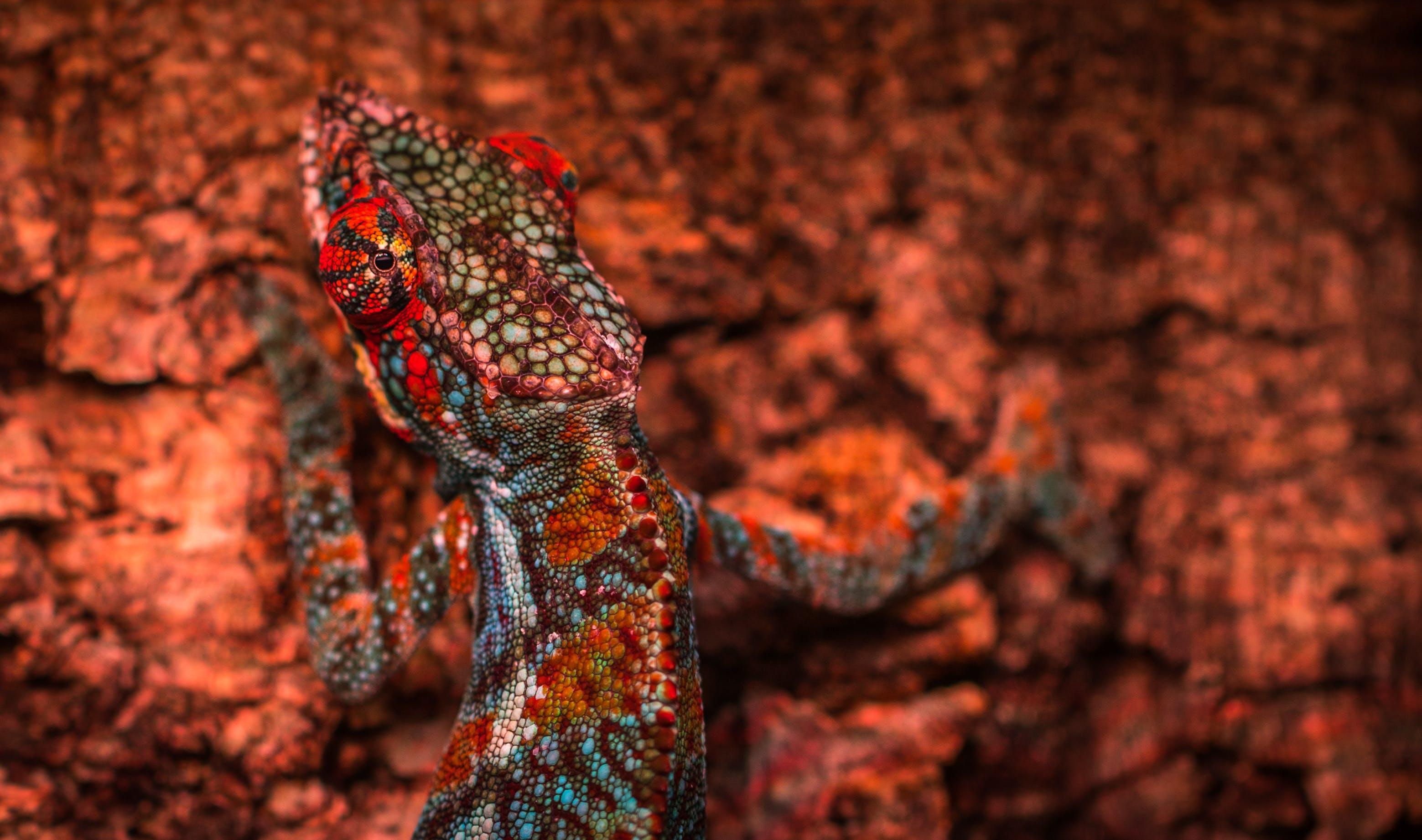Close-up Photo Multicolored Lizard