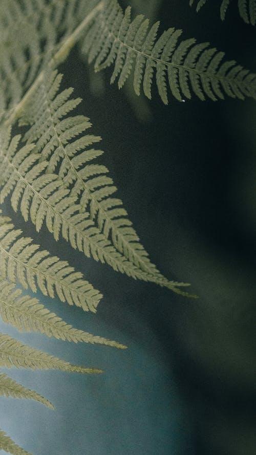 Fresh fern leaves in countryside