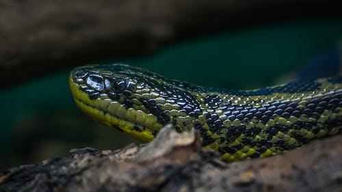 Foto d'estoc gratuïta de animal, balances, colors, de perfil