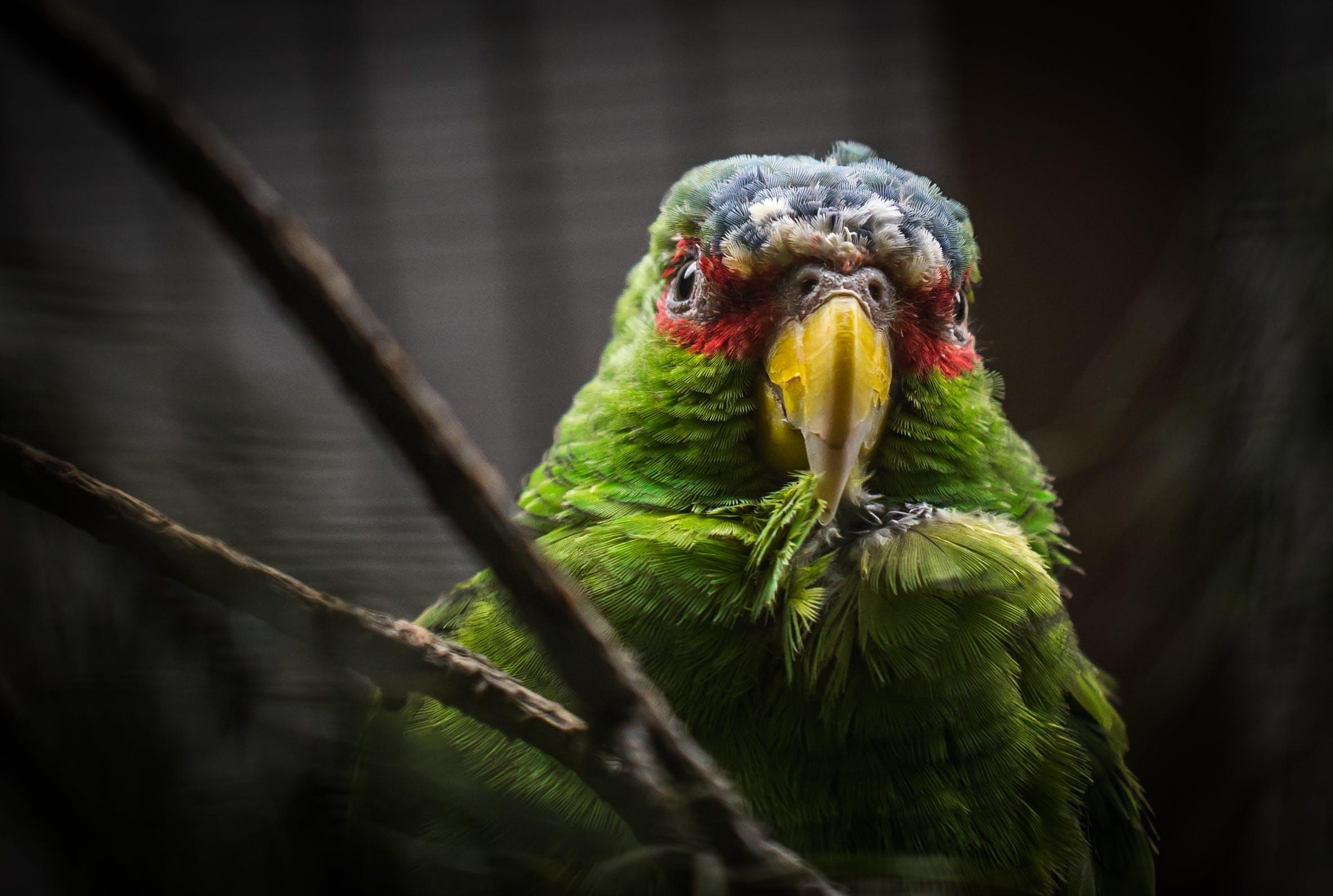 Green and Gray Bird Screenshot