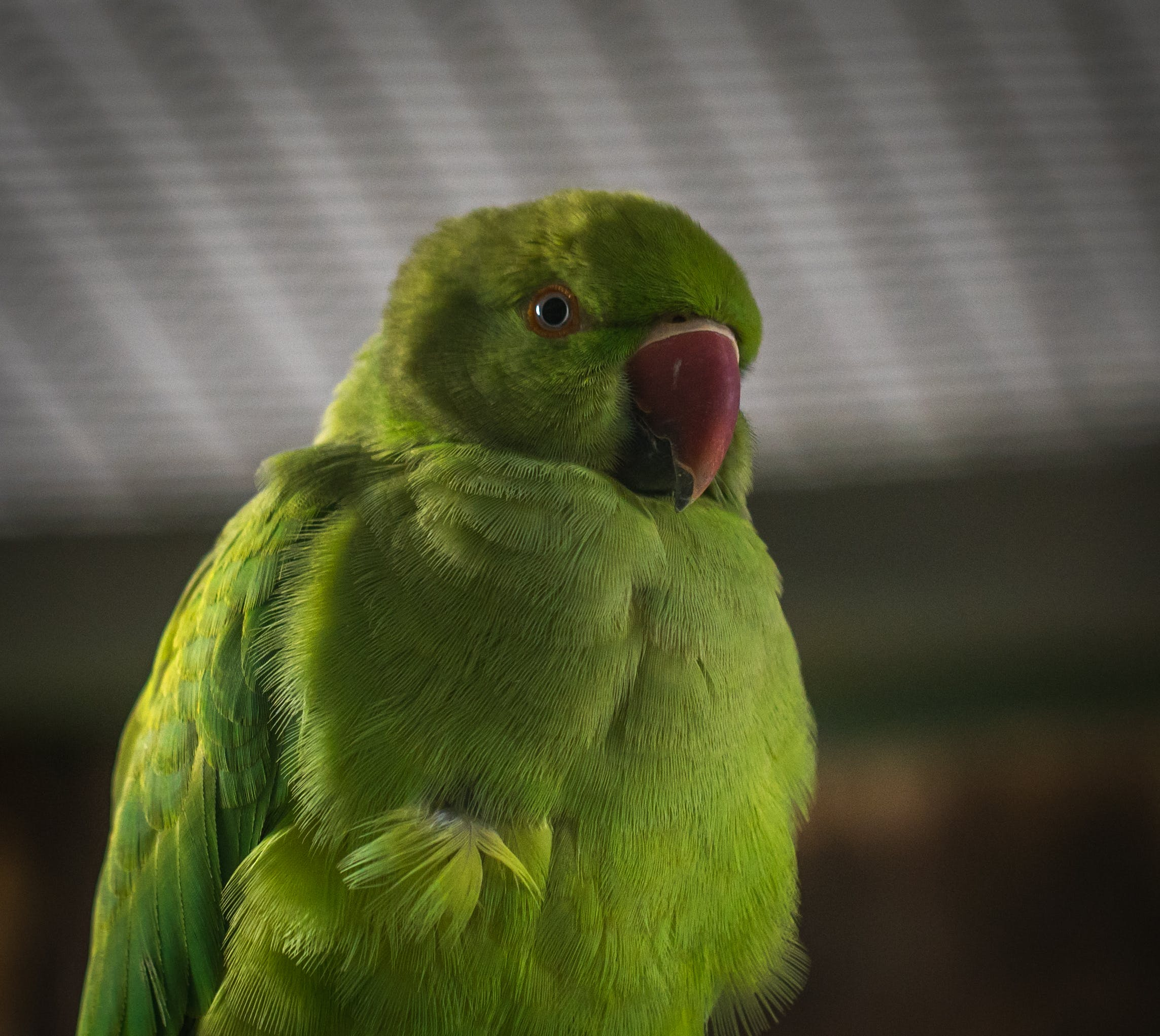 Free stock photo of animals, birds