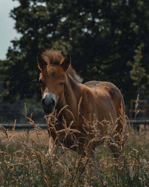 Brown horse in grassy field