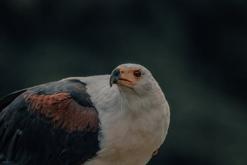 Wild eagle sitting in nature