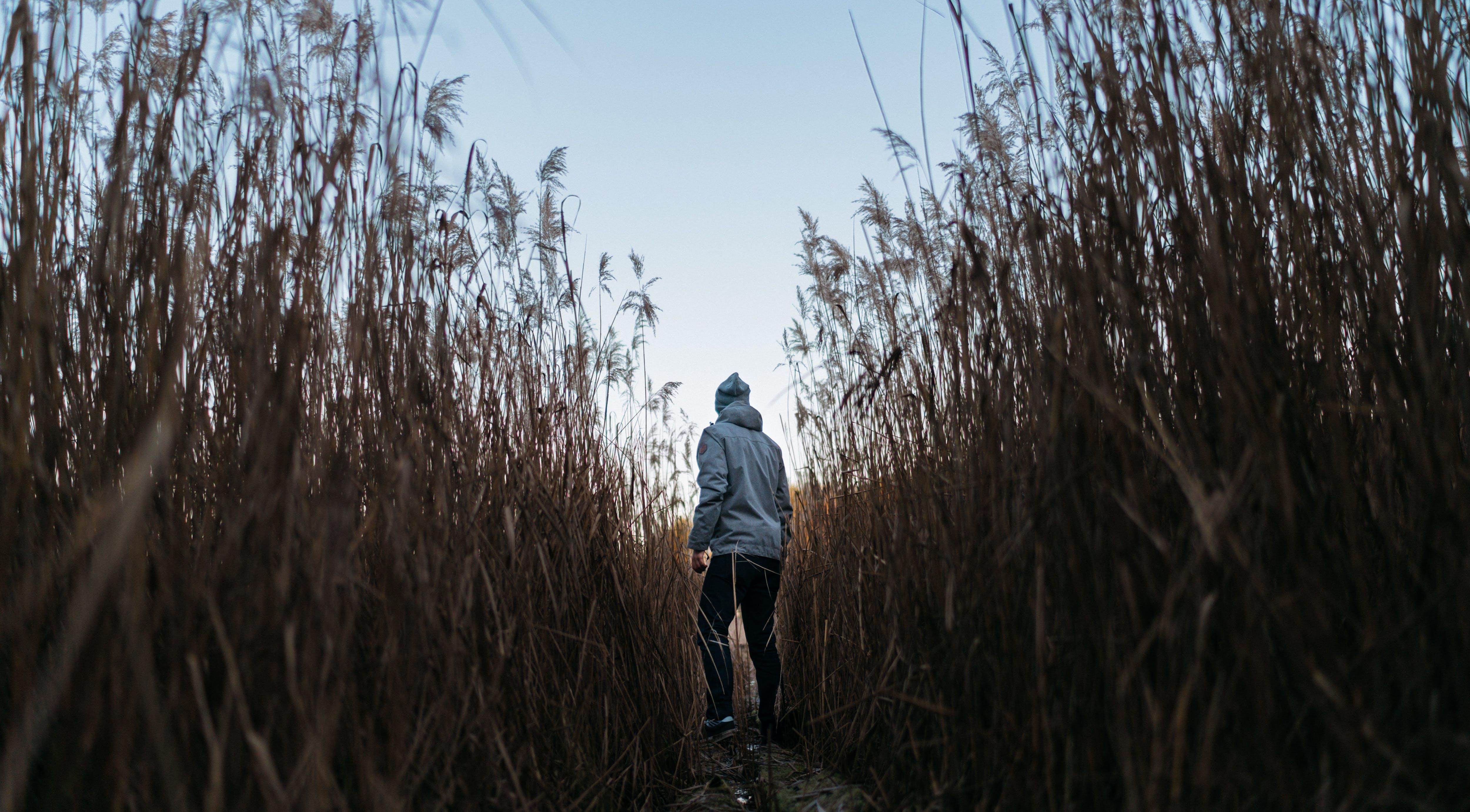 Základová fotografie zdarma na téma cesta, chodník, denní světlo, flóra