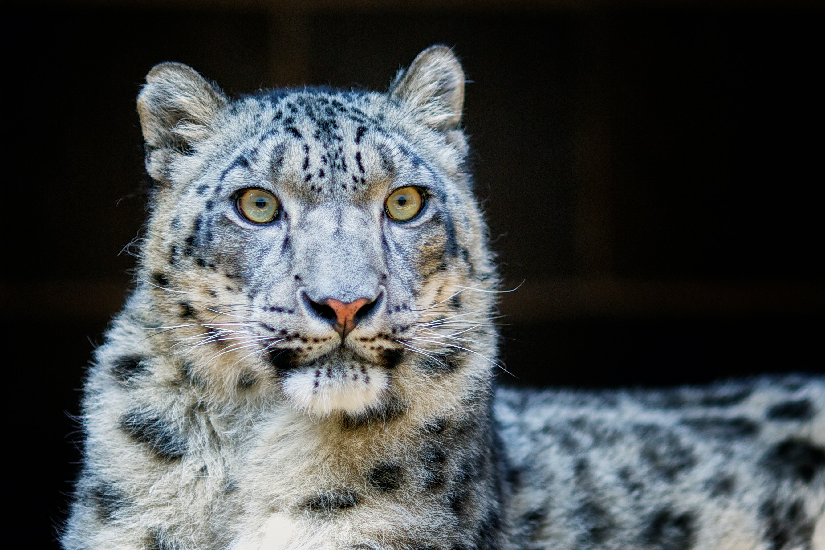 Close-Up Photography Of Leopard · Free Stock Photo