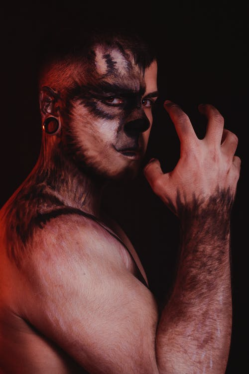 aplha, gruñido de lobo, lobo agresivo의 무료 스톡 사진