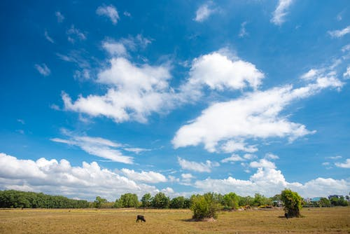 Green Grass Field Under Blue Sky and White Clouds