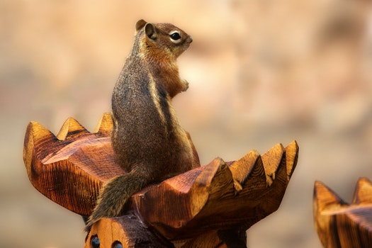 Macro Shot Photography of Gray and Brown Squirrel on Brown Wood