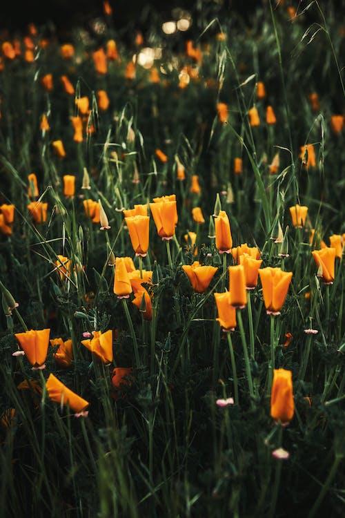 Kostnadsfri bild av blad, blomma, fält