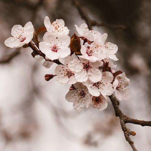 Gratis stockfoto met aantrekkelijk mooi, abrikoos, appel