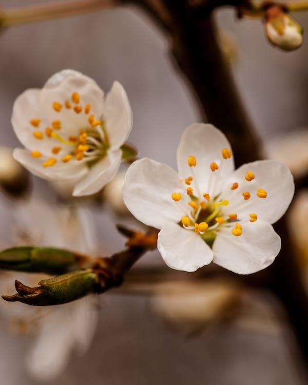 Ilmainen kuvapankkikuva tunnisteilla apple, aprikoosi, englanti