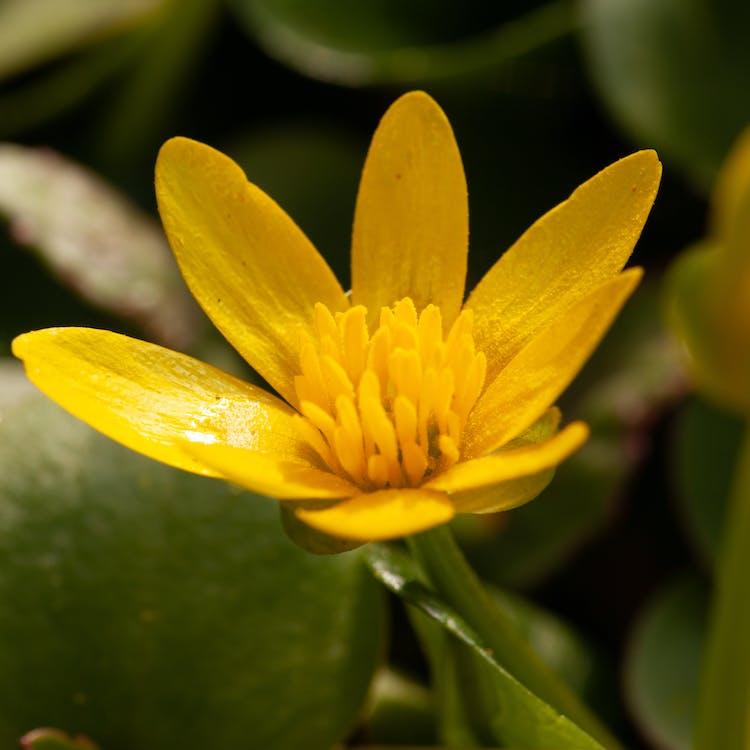 flowersofinstagram, flowerstagram, instagood 的 免費圖庫相片
