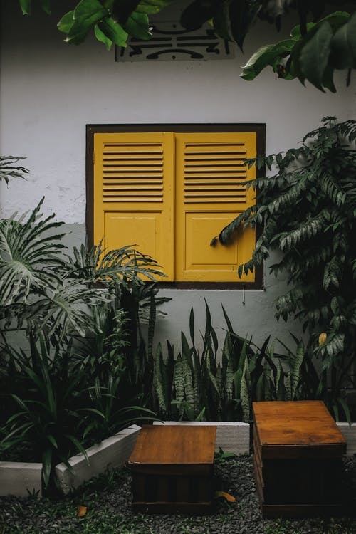 Green Plant Beside Brown Wooden Table