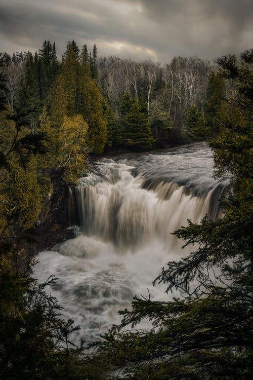 Immagine gratuita di acqua, albero, autunno