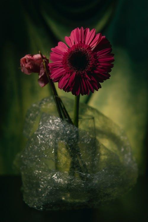 Ảnh lưu trữ miễn phí về cắm hoa, cặp vợ chồng, chúc mừng ngày lễ tình nhân