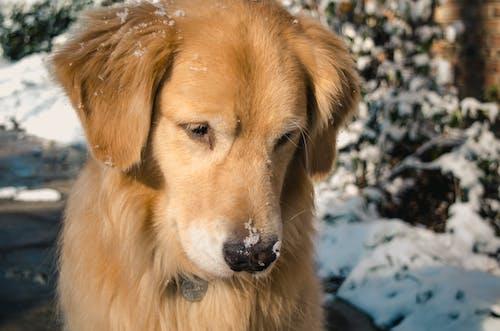 Бесплатное стоковое фото с глаз, домашний, животное, зима