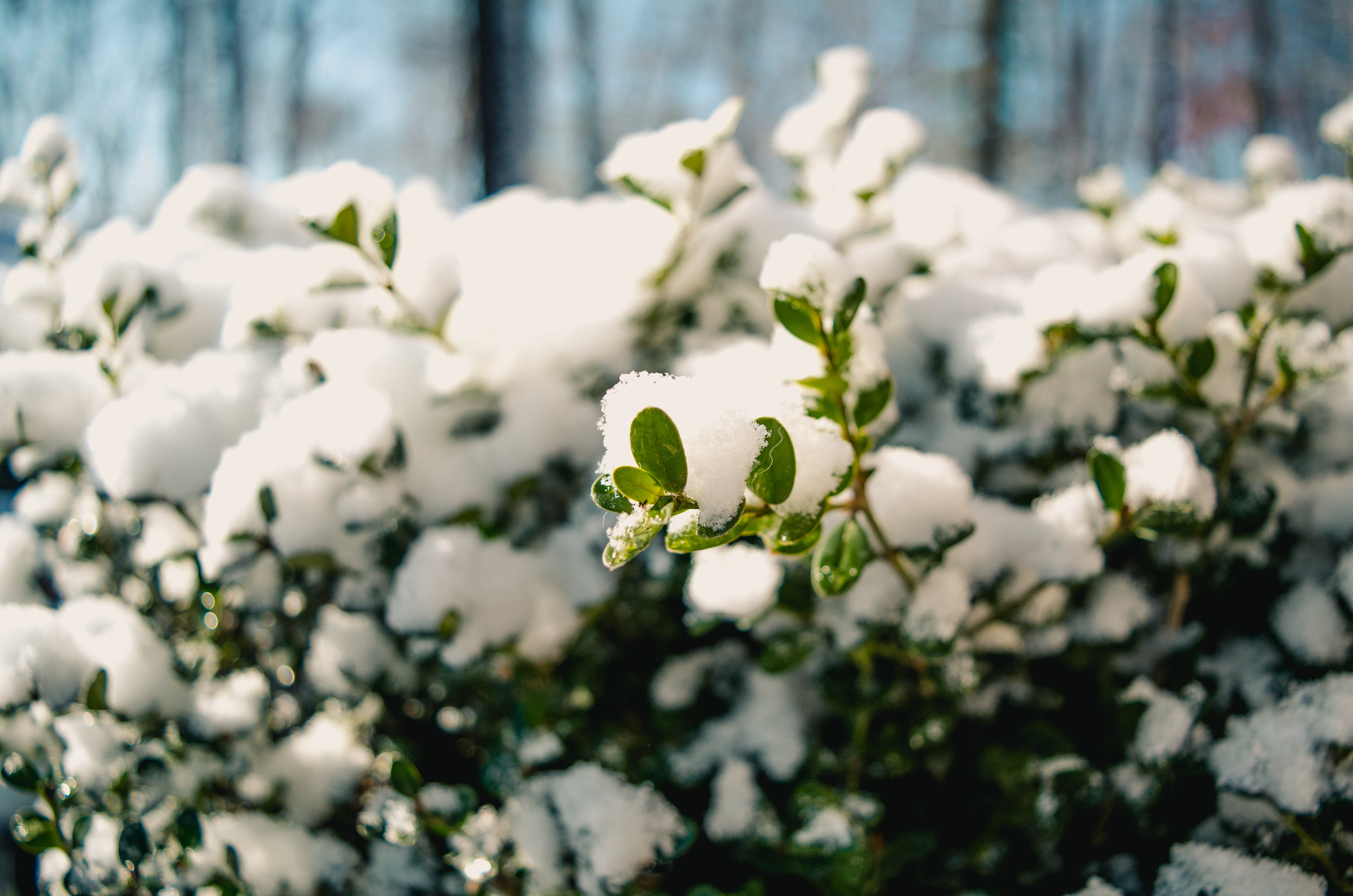 Photography of Snow on Plants