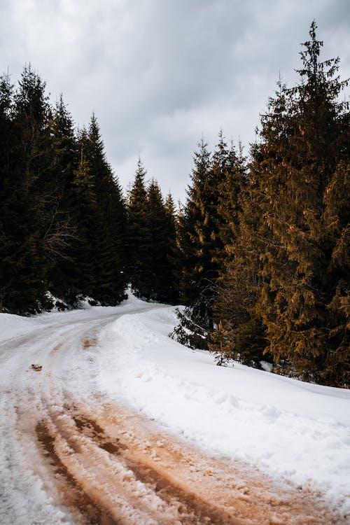 Gratis stockfoto met berg, bevroren, boom